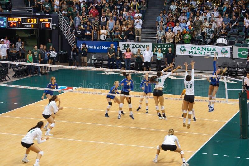 Le joueur d'UCSB saute pour frapper le volleyball pendant que les joueuses des femmes d'UH sautent photos libres de droits
