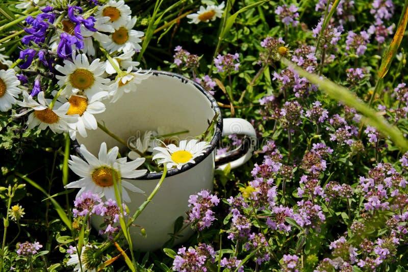 Le jour d'été ensoleillé les fleurs médicinales sauvages se situent dans une vieille tasse blanche métallique photo libre de droits