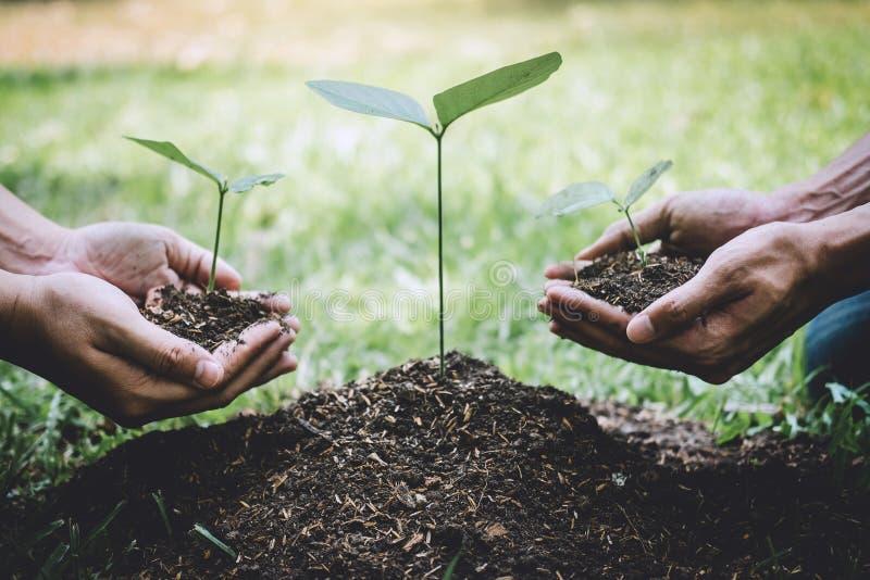 Le jour d'environnement du monde reboisant, mains de l'aide de jeune homme plantaient les jeunes plantes et l'arbre s'?levant dan photo libre de droits
