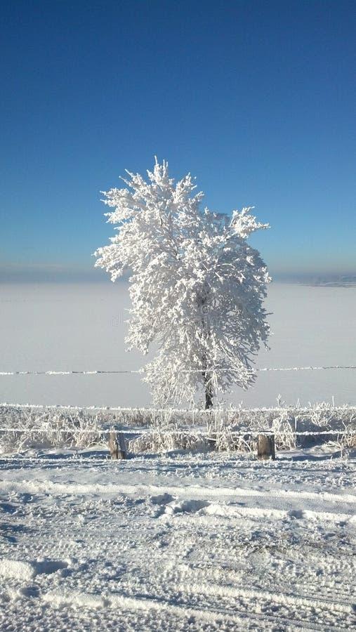 Le jour d'hiver photographie stock
