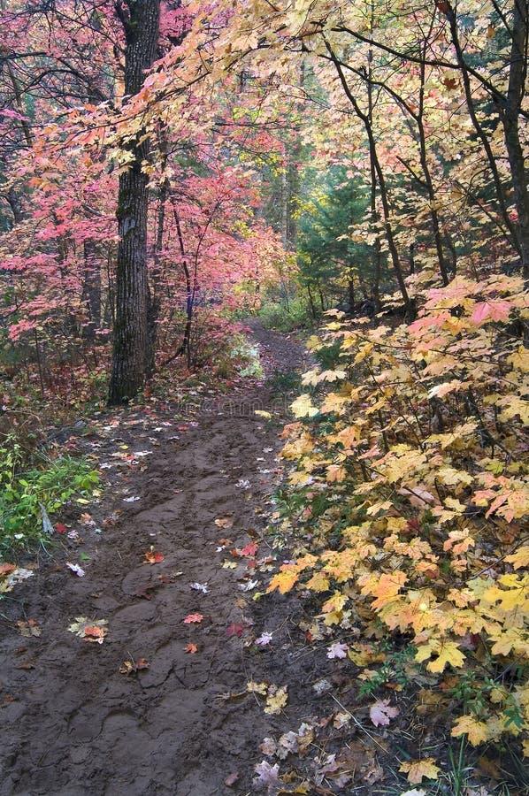 Le journal de hausse aboutit par l'écran des arbres d'érable dans le feuillage d'automne photographie stock