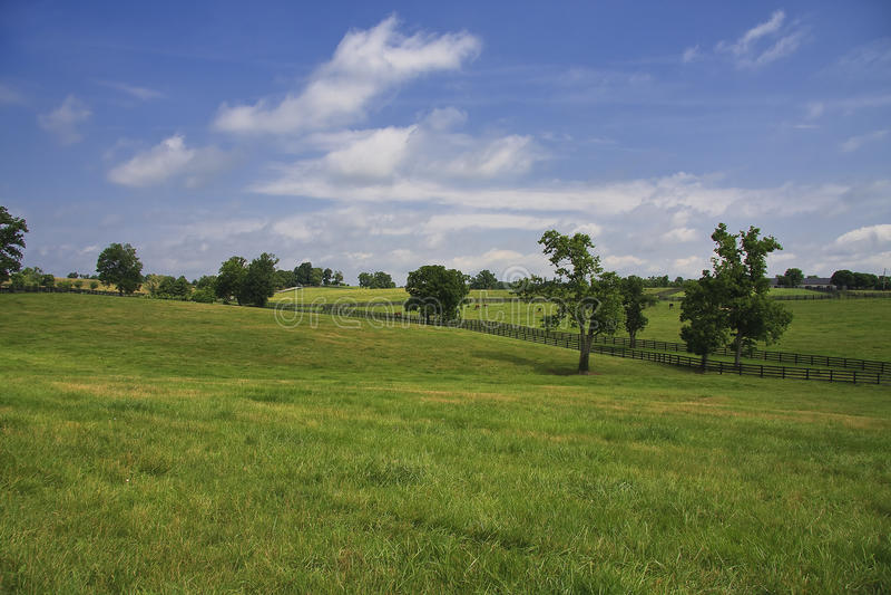 Le Kentucky Bluegrass photographie stock