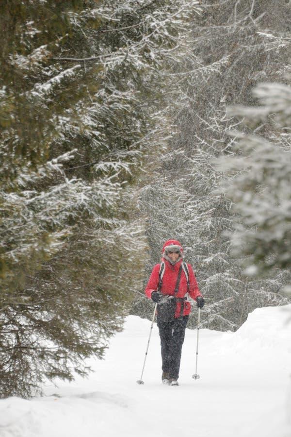 Le kvinna som går på ett snöig spår u. snowfall arkivbilder