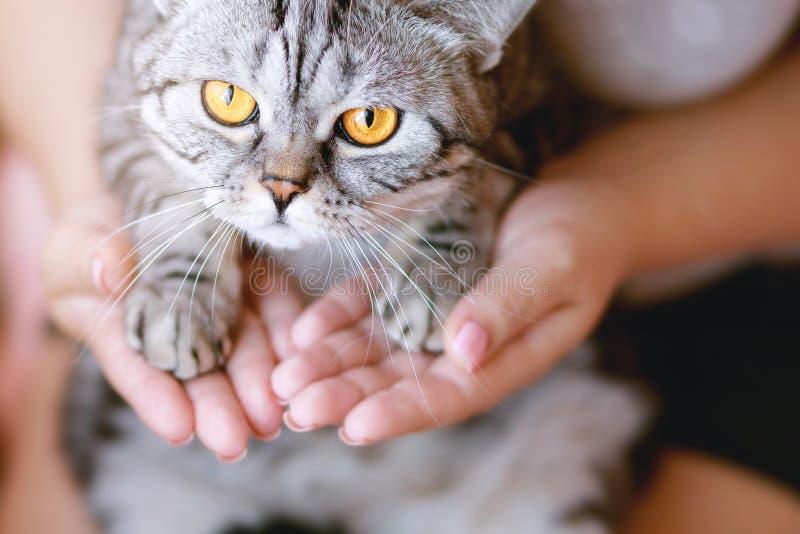 Le kvinnan hemma som rymmer hennes älskvärda fluffiga katt Husdjur och livsstilbegrepp royaltyfri fotografi