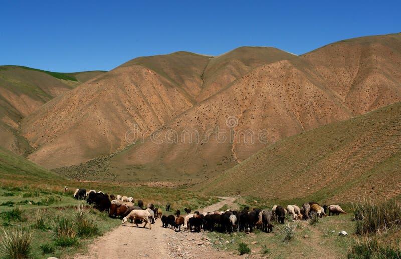 Le Kyrgyzstan aménagent en parc image libre de droits