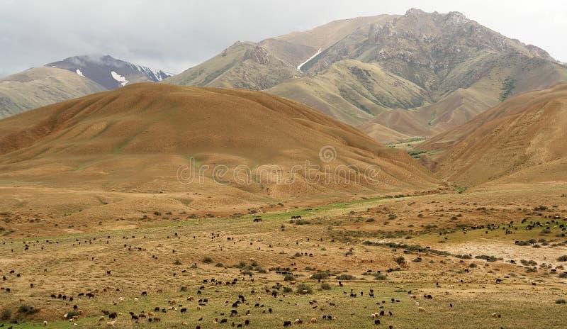 le Kyrgyzstan aménagent en parc photos stock
