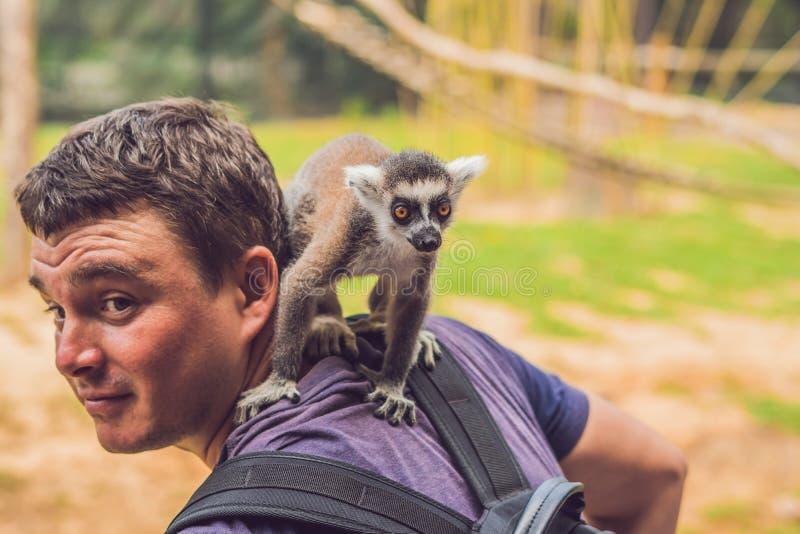 Le lémur s'est élevé sur l'homme Attaque animale dans le zoo photographie stock
