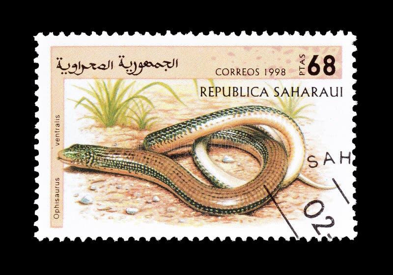 Le lézard en verre oriental sur le timbre-poste photos stock