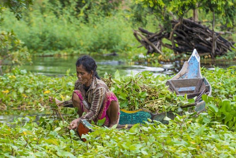 Le lac Cambodge de sève de Tonle photo stock