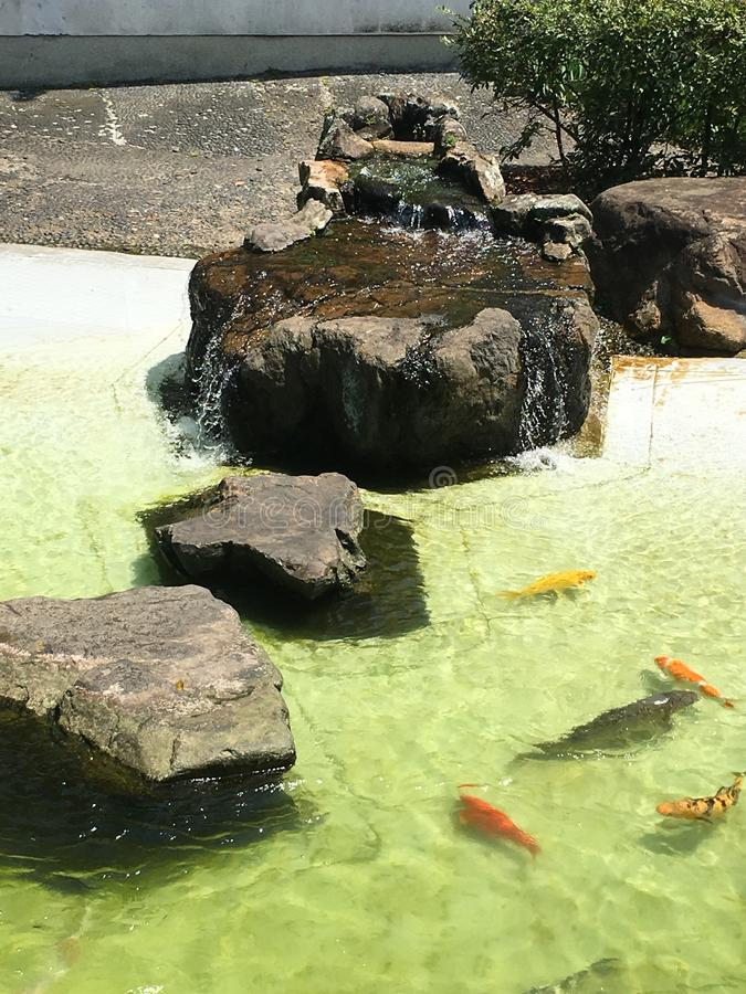 Le lac carp's image libre de droits