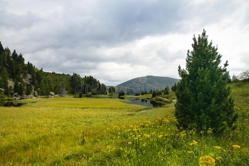 Le lac et la montagne alpins aménagent en parc avec le pré et le sapin et les pins photo libre de droits