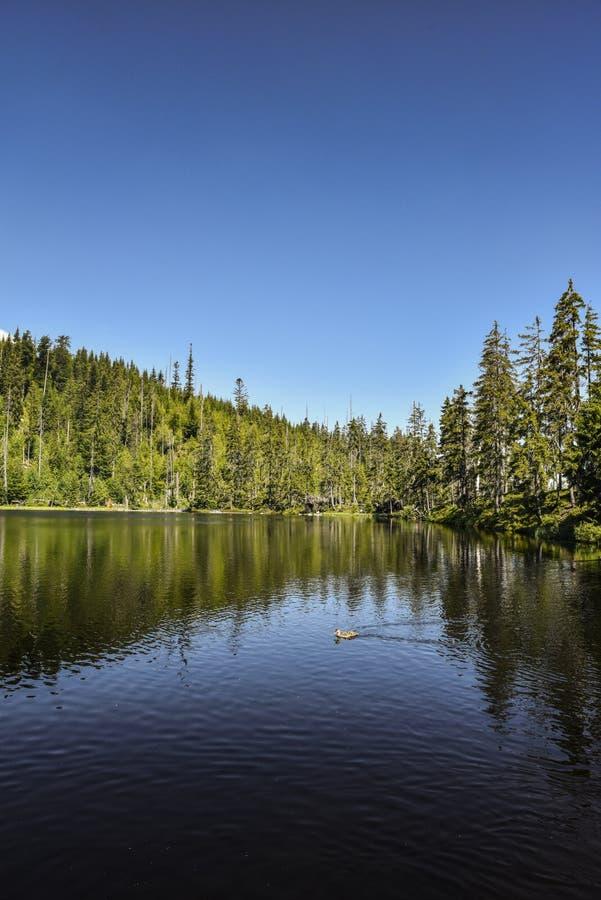 Le lac Prasily, lac naturel dans la République Tchèque est situé dans les montagnes de Sumava images libres de droits