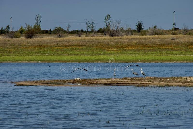 Le lac Rabisha et l'oiseau de trois hérons détendent à la péninsule et aux deux de l'eau s volant vers le rivage photos stock