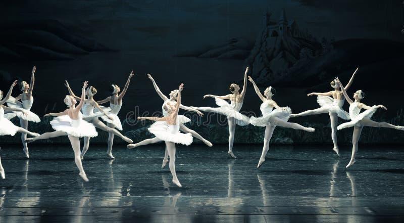Le lac swan de famille-ballet de cygne photo libre de droits