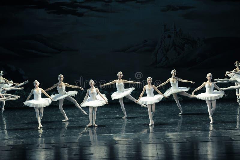 Le lac swan de famille-ballet de cygne photos libres de droits