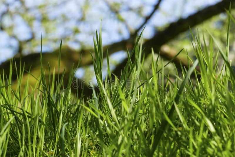 Le lame di erba si pesano su un prato nel vento fotografie stock