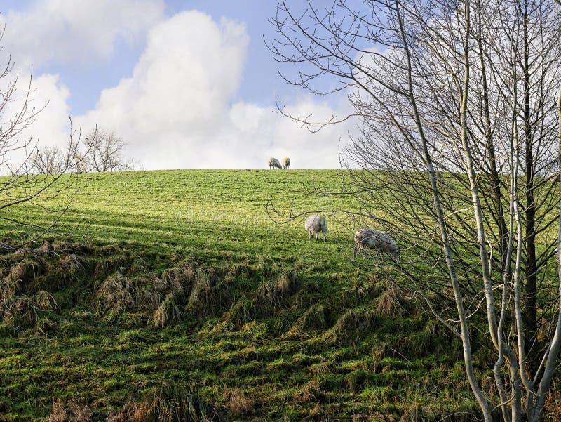 Le Lancashire est amarre sur la route à Barnoldswick dans la belle campagne à la frontière de Lancashire Yorkshire dans Nort images libres de droits