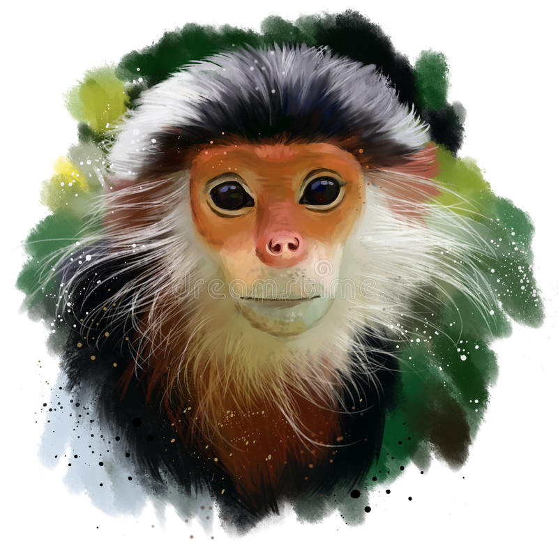 Le Langur rouge-shanked de Douc illustration libre de droits