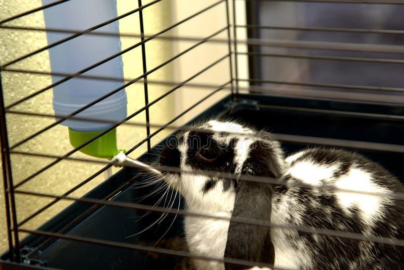 Le lapin dans la cage photographie stock libre de droits