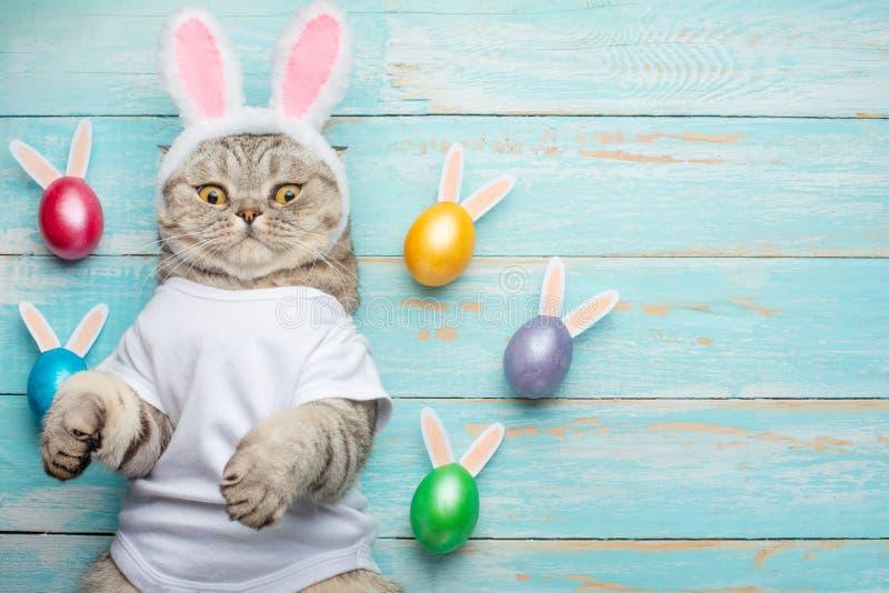 Le lapin de Pâques, le chat avec des oreilles de lapin et la Pâques ont coloré avec des oeufs et des oreilles Pâques et vacances photos stock