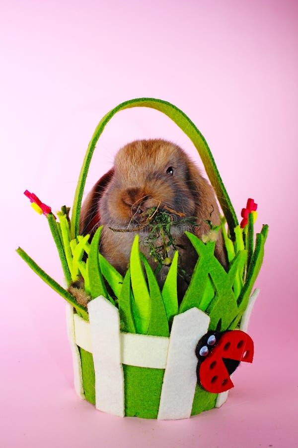 Le lapin de Pâques mignon taillent des lapins d'animal familier Animal mignon de Pâques image stock