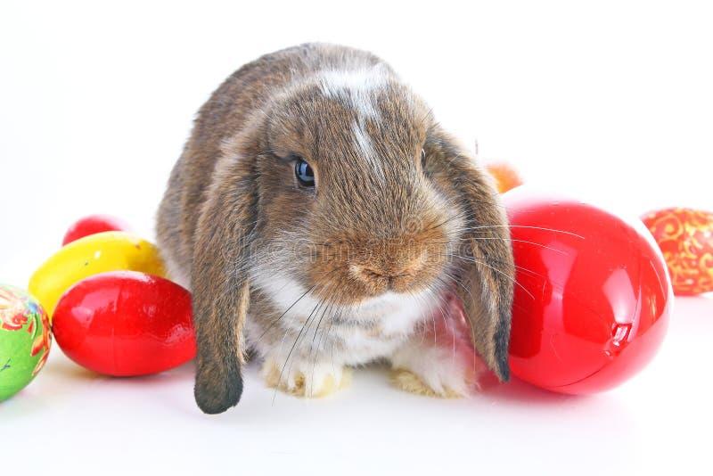 Le lapin de Pâques taillent avec des oeufs sur le fond blanc d'isolement photo libre de droits