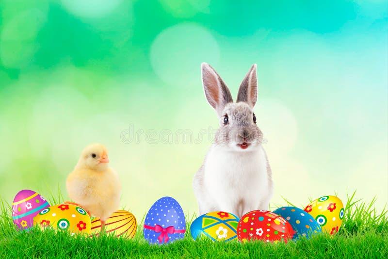 Le lapin et le poussin sont des meilleurs amis avec des oeufs de pâques sur le fond de ressort L'espace pour le texte photos libres de droits
