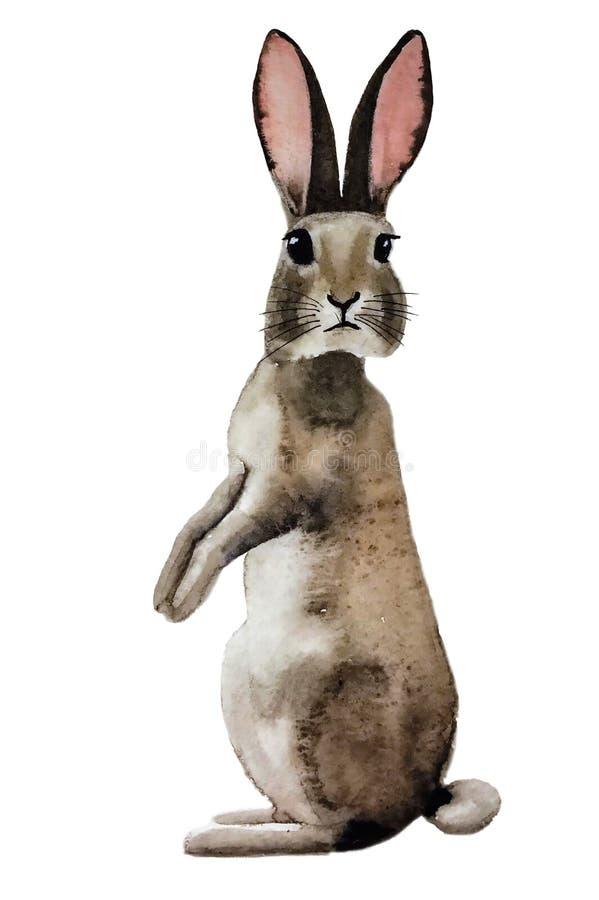 Le lapin gris pelucheux mignon devrait se tourner vers nous illustration libre de droits