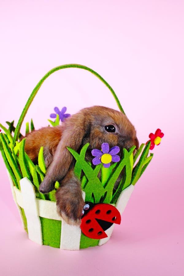Le lapin mini taillent le lapin sur le panier de Pâques de ressort Bleu de Thuringian images stock