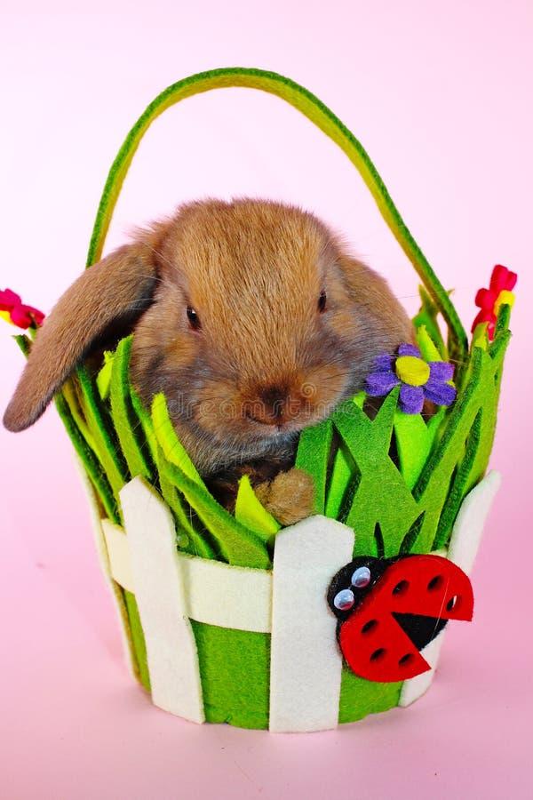 Le lapin mini taillent le lapin sur le panier de Pâques de ressort Bleu de Thuringian images libres de droits