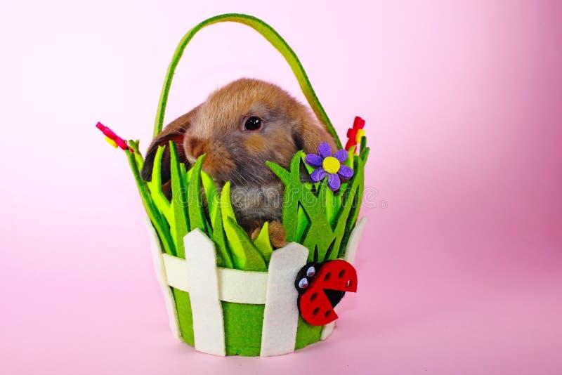 Le lapin mini taillent le lapin sur le panier de Pâques de ressort Bleu de Thuringian image stock
