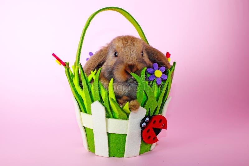 Le lapin mini taillent le lapin sur le panier de Pâques de ressort Bleu de Thuringian photo stock