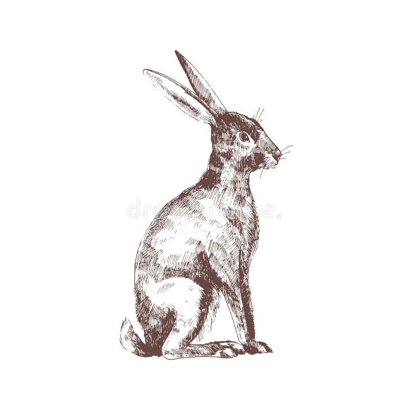 Le lapin, le lapin ou les lièvres mignons ont isolé tiré par la main avec des courbes de niveau sur le fond blanc Dessin élégant  illustration de vecteur