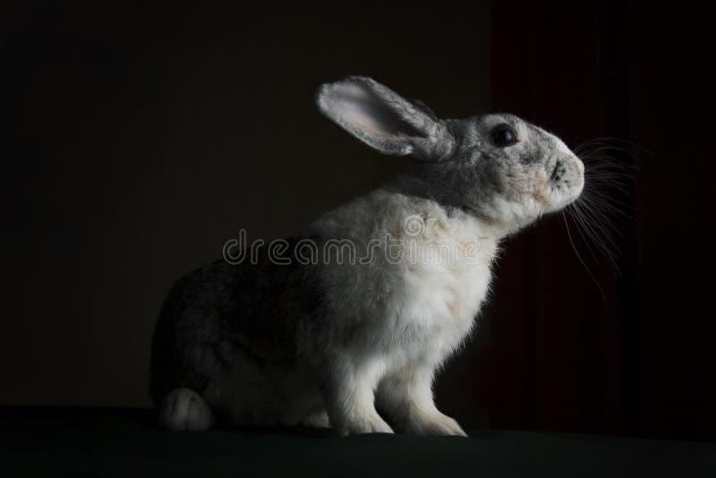 Le lapin voit la lumière photo stock