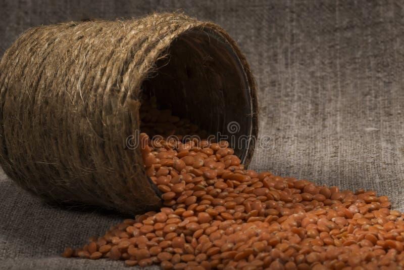 Le lenticchie rosse hanno versato fuori, spargimento delle latte di fatto a mano struttura della lenticchia, modello della lentic immagini stock