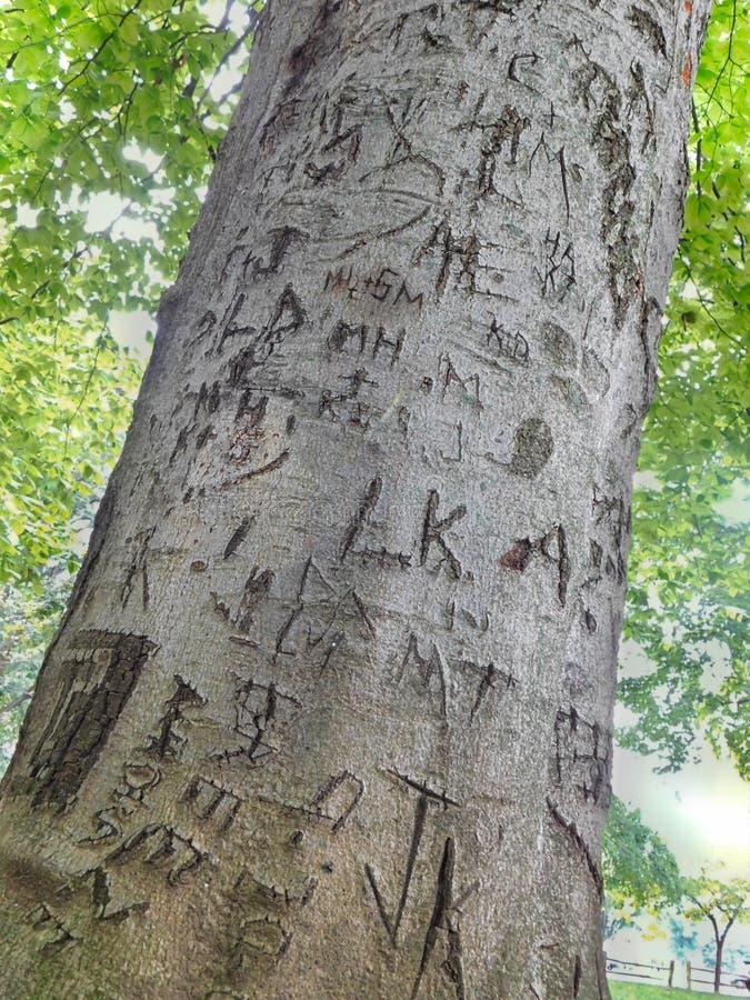 Le lettere hanno scolpito in un albero immagini stock