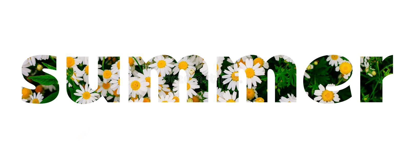 Le lettrage d'été a fait du gisement de fleurs de marguerite image libre de droits