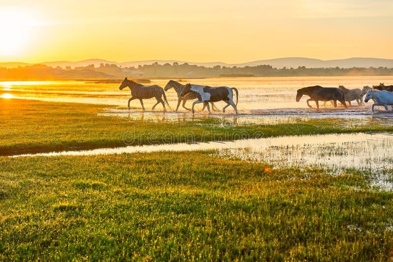 Le lever de soleil courant de manada photo stock