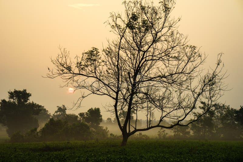 Le lever de soleil de début de la matinée au-dessus du thé givré met en place avec les arbres sans feuilles photo libre de droits