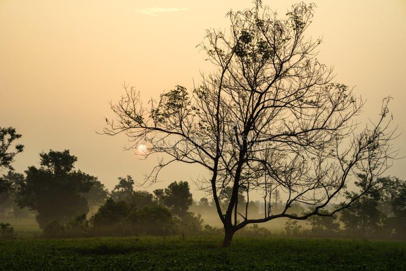 Le lever de soleil de début de la matinée au-dessus du thé givré met en place avec les arbres sans feuilles images stock