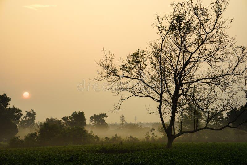 Le lever de soleil de début de la matinée au-dessus du thé givré met en place avec les arbres sans feuilles photo stock