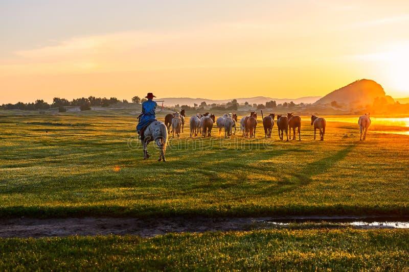 Le lever de soleil de troupeau et de manada photographie stock libre de droits