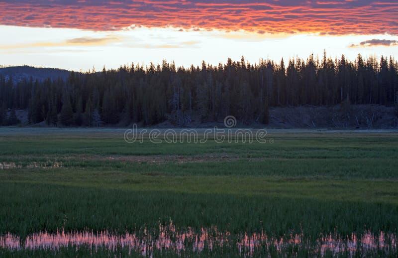 Le lever de soleil rose s'est reflété dans l'herbe de l'eau à la crique de pélican en parc national de Yellowstone images stock