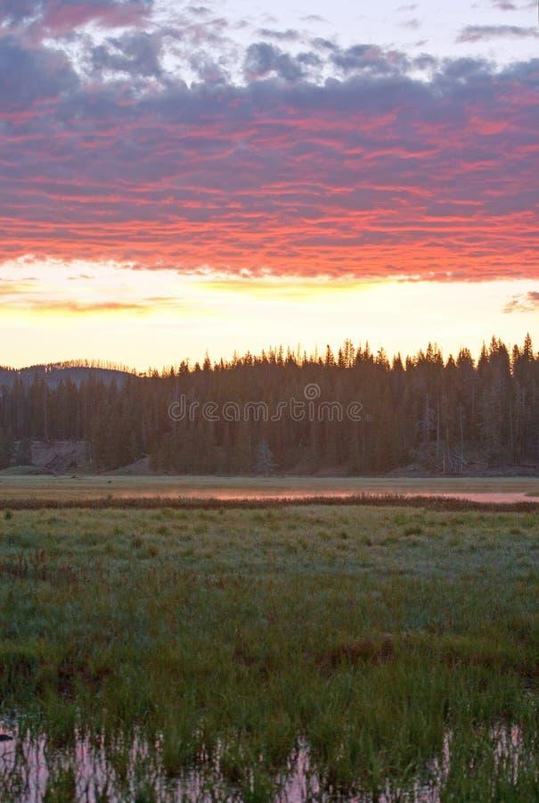 Le lever de soleil rose s'est reflété dans l'herbe de l'eau à la crique de pélican en parc national de Yellowstone au Wyoming images libres de droits