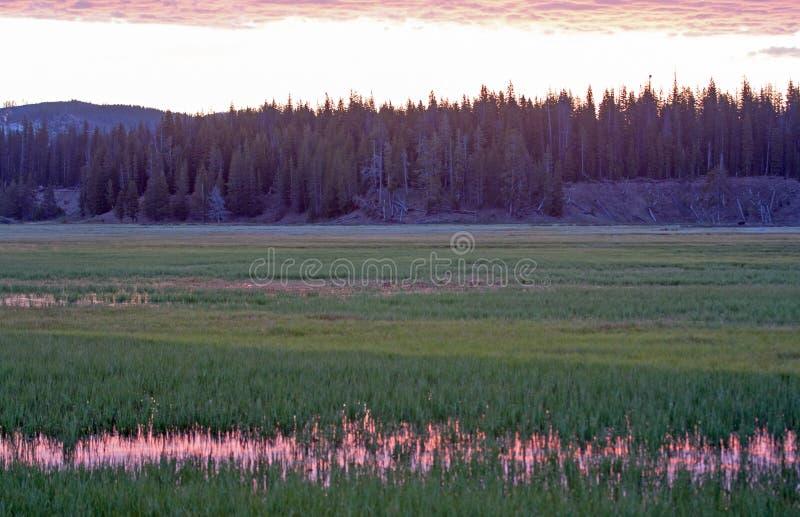 Le lever de soleil rose s'est reflété dans l'herbe de l'eau à la crique de pélican en parc national de Yellowstone au Wyoming images stock