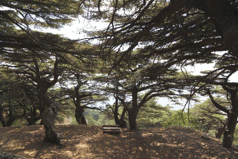 Download Le Liban Cedar Forest photo stock. Image du bench, symbole - 76076228