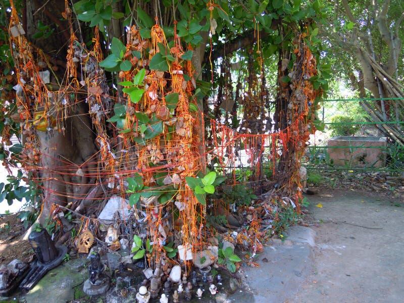 Le lieu saint de seigneur Shiva sous un banian images libres de droits