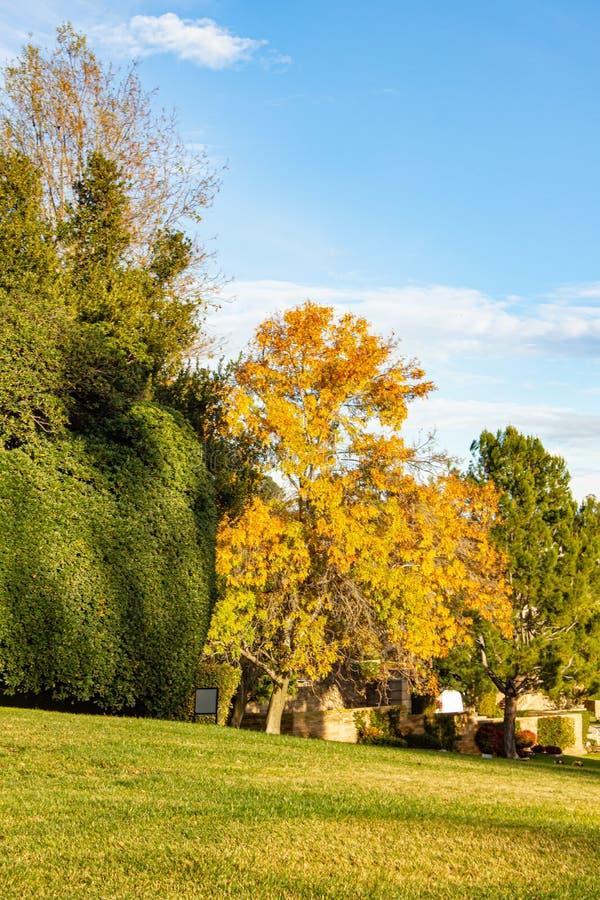 Le linee di albero fanno il giardinaggio con legno di bosso e prato inglese, cespugli, cielo blu e nuvole immagini stock libere da diritti