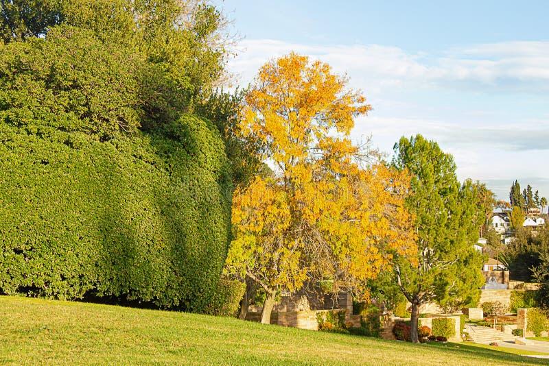 Le linee di albero fanno il giardinaggio con legno di bosso e prato inglese, cespugli, cielo blu e nuvole immagine stock