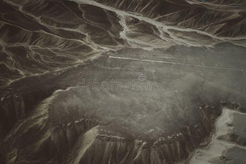 Le linee famose di Nazca nel Perù, qui potete vedere la figura di un colibrì immagini stock libere da diritti